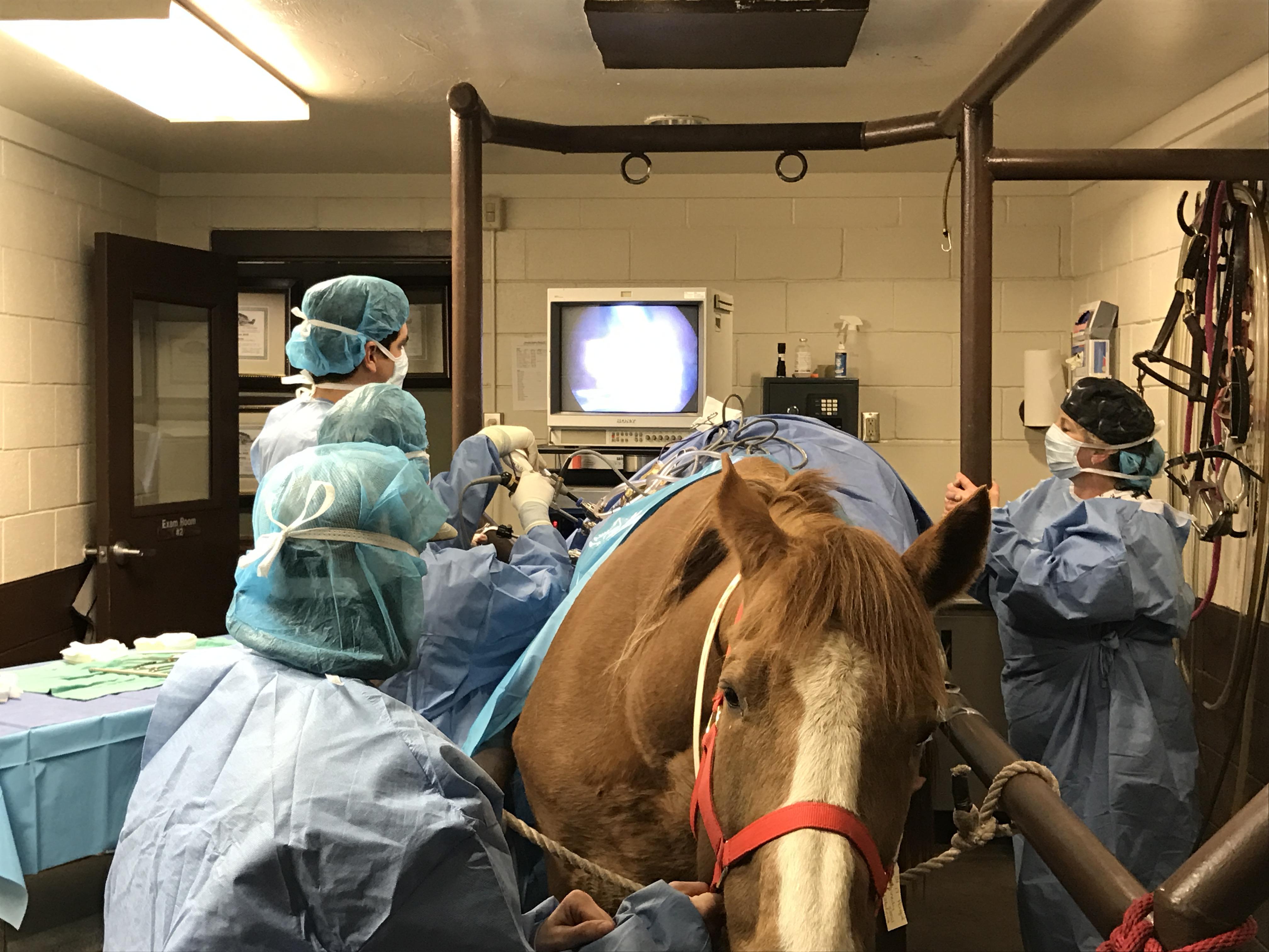 Gallery | Veterinarian in Edmond, OK | Oakridge Equine Hospital